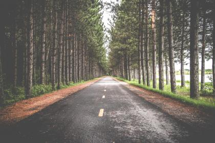 road, street, woods, forest, trees, green, leaves, travel, adventure