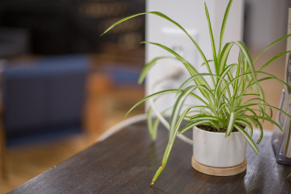 free photo of potted   plant