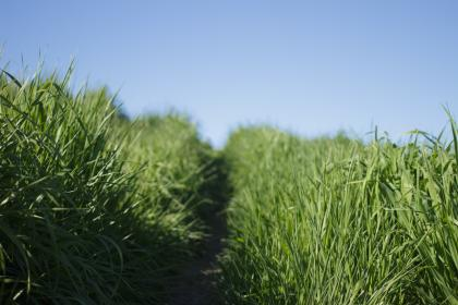 nature, grasslands, grass, road, path, sky, green, blue