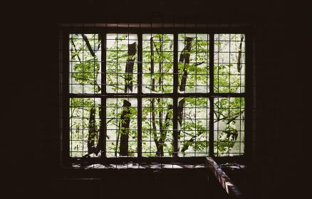 caged, window, branches, green, wood