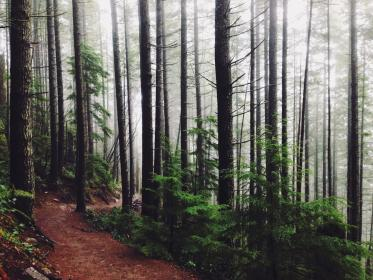 woods, trees, forest, trail, path, trek, hike, fog, nature, outdoors