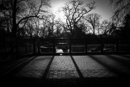 trees, fence, cobblestone, shadows, black and white