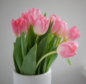 tulips, spring, flowers, pink, vase, indoors, plants, vegetation, organic, pretty, botany, bloom, blossom