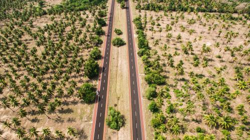 lane, road, path, farm, plants, agriculture, coconut, trees, aerial, adventure, travel, trip