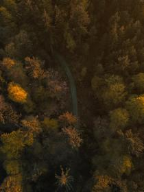 trees, plant, nature, autumn, fall, forest