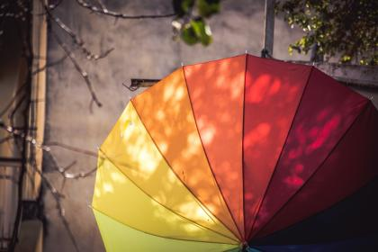 nature, tree, branches, umbrella, color, rainbow, leaves