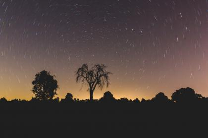night, stars, galaxy, trees, plant, nature, silhouette