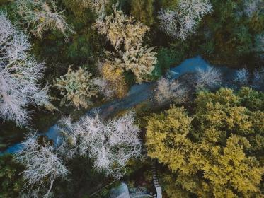 trees, plants, nature, autumn, fall, river, water, mountain