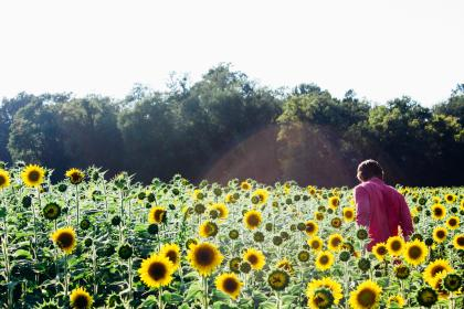 sunflowers, garden, plants, green, nature, guy, man, people, sunshine, summer, trees