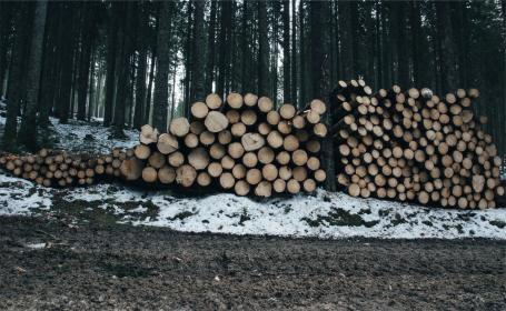 wood, logs, lumber, forest, woods, dirt, mud