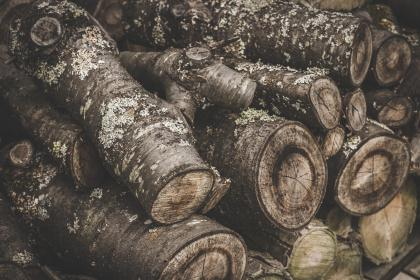 free photo of log  trunk