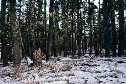 forest, woods, trees, moss, snow, logs, branches, nature