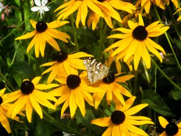 yellow, flowers, garden, nature, butterfly, instect
