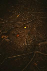 nature, woods, forest, soil, root, trees