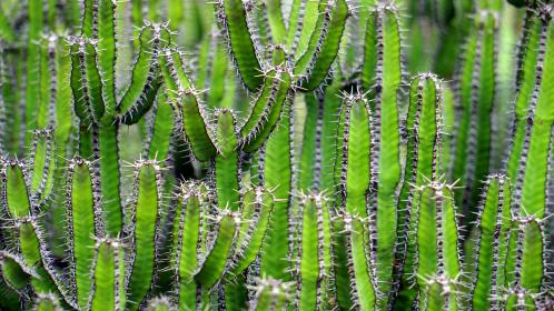 free photo of nature  plants