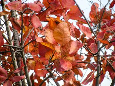 red, leaves, autumn, branches