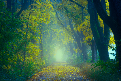 enchanting,  forest,  walk,  hike,  path,  nature,  tree,  woods,  green,  leaves,   nature,  landscape,  scenery,  mysterious