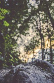 rocks, boulders, forest, blurry