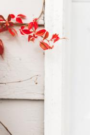 red, leaves, white, house