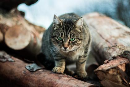 wood, outdoor, nature, cat, pet, animal, blur