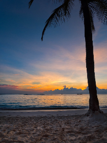 vacation,  beach,  sunset,  palm trees,  beautiful,  mobile wallpaper,  ocean,  water,  nature,  outdoors,  sand,  waves,  sky,  clouds,  sunlight,  tropical,  travel,  tourism