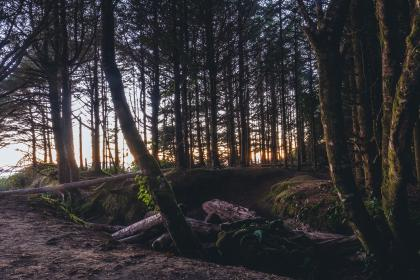 trees, plant, forest, morning, view, wood, soil