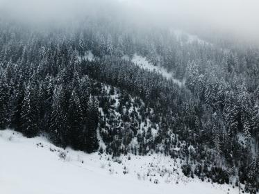 snow, winter, cold, weather, trees, plants, nature, mountain, highland, fog