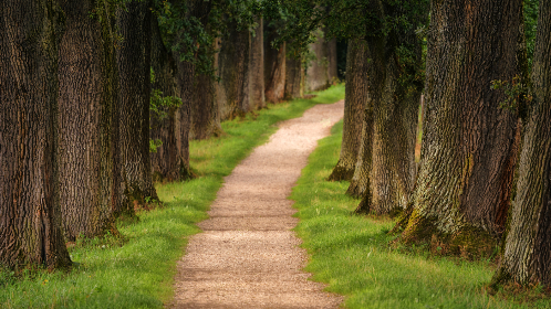 park,  trees,  path,  walk,  hike,  green grass,  woods,  forest,  nature,  scenic,  rows