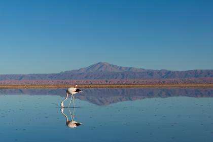 animal, bird, water, mountains, sky, view, long, neck, nature, heron, egret