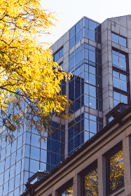 city,   autumn,   building,   facade,   fall,   office,   windows,   exterior,   modern,   business,   architecture,   tree,   branches,  glass