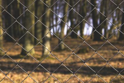 chainlink, fence, park, nature, trees, forest, woods, outdoors