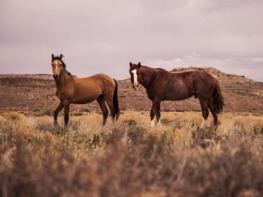 horse, animal, brown, grass, outdoor, mountain, landscape, view