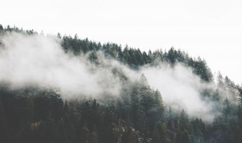 trees, plant, forest, nature, fog, cold