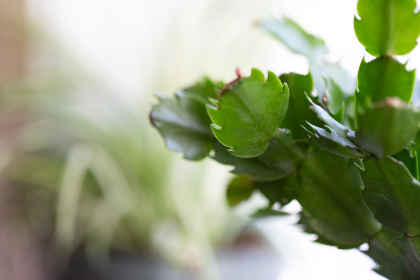 free photo of house   plant