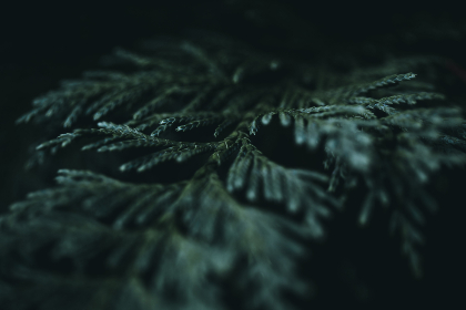 fern,  leaf,  macro,  dark,  texture,  bokeh,  natural,  pattern,  plant,  flora,  botany,  green,  stem,  branch,  wild
