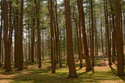 trees, woods, forest, grass, picnic tables, parc