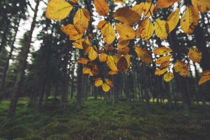 yellow, leaves, trees, forest, woods, nature, grass