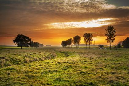 sunset, clouds, sky, trees, fields, grass, hay, cows, farm
