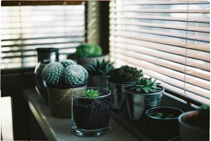 plant, garden, flower, cactus, green, flowerpot, table, window