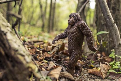 gorilla, animal, ape, forest, woods, nature, trees, branches, leaves, dirt