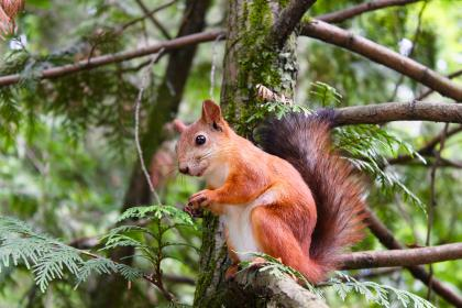 tree, plant, nature, forest, squirrel, marmot, animal