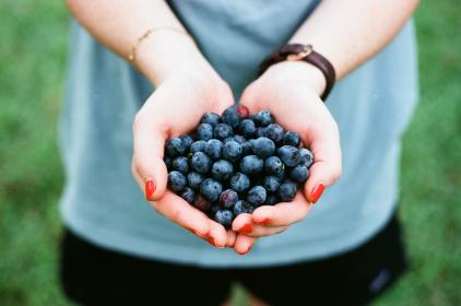 blueberry, fruit, food, hand, palm, garden, healthy