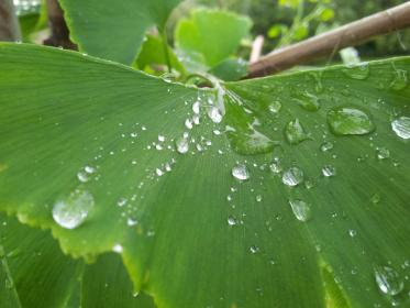 green, leaf, leaves, nature, wet, water, rain drop