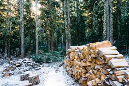 wood, logs, lumber, trees, forest, woods, snow, cold, nature, outdoors