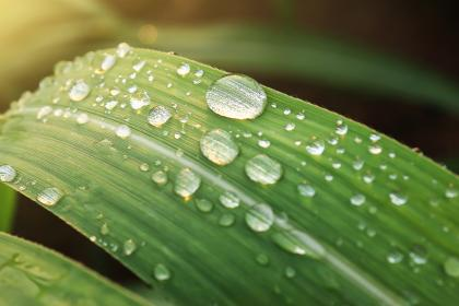 green, leaf, wet, water, raindrops, nature, blur