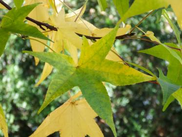 leaves, branches