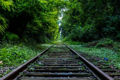 green, grass, trees, forest, woods, railroad, train tracks, bushes, nature