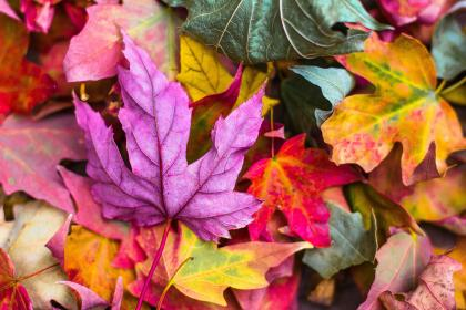 nature, leaves, stems, veins, bold, colors, fall, autumn