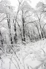winter, snow, ice, frozen, freeze, cold, trees, nature, forest, woods, black and white
