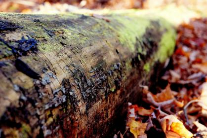 tree trunk, bark, woods, leaves, nature